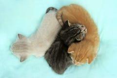 Τρία χαριτωμένα μικρά γατάκια που βρίσκονται στο κρεβάτι Στοκ εικόνες με δικαίωμα ελεύθερης χρήσης