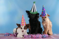 Τρία χαριτωμένα μικτά σκυλιά φυλής που κάθονται με τις ταινίες Στοκ εικόνες με δικαίωμα ελεύθερης χρήσης