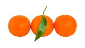Τρία ώριμα πορτοκαλιά μανταρίνια με το πράσινο φύλλο σε μια σειρά που απομονώνεται στοκ φωτογραφίες