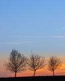 Τρία Στοκ φωτογραφία με δικαίωμα ελεύθερης χρήσης