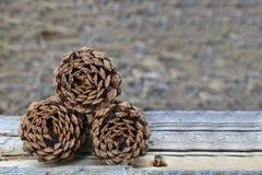 Τρία Pinecones που φωτογραφίζεται στο δάσος Στοκ Φωτογραφίες