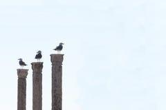Τρία seagulls σε τρεις στυλοβάτες στο καθαρό κλίμα, Στοκ εικόνα με δικαίωμα ελεύθερης χρήσης