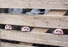 Τρία snouts Στοκ εικόνα με δικαίωμα ελεύθερης χρήσης
