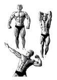 τρίο bodybuilders διανυσματική απεικόνιση