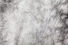 Τρίχα αλόγων Στοκ Φωτογραφία