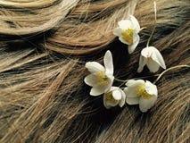 τρίχωμα λουλουδιών Στοκ φωτογραφία με δικαίωμα ελεύθερης χρήσης