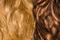τρίχωμα Στοκ φωτογραφία με δικαίωμα ελεύθερης χρήσης