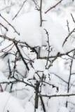 Τρίψτε κάτω από το χιόνι στοκ φωτογραφίες