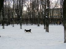 Τραίνα σκυλιών στο πάρκο Στοκ Φωτογραφίες