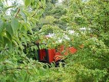 Τραίνο στα δάση στοκ φωτογραφία