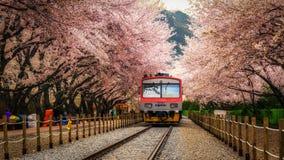 Τραίνο στο σταθμό gyeonghwa στοκ εικόνες