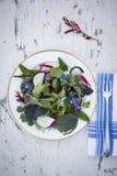 Τραγανή σαλάτα Στοκ φωτογραφίες με δικαίωμα ελεύθερης χρήσης