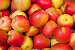 τραγανός juicy μήλων Στοκ Φωτογραφίες