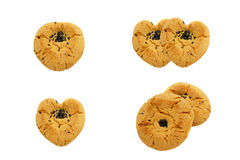 Τραγανό μπισκότο ξύλων καρυδιάς Στοκ Εικόνες