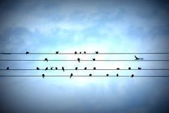 τραγουδώ το τραγούδι Στοκ Φωτογραφία