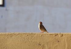 Τραγούδι σπουργιτιών στον ήλιο στοκ εικόνα με δικαίωμα ελεύθερης χρήσης