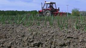 Τρακτέρ με τα γεωργικά μηχανήματα σε έναν τομέα κρεμμυδιών απόθεμα βίντεο
