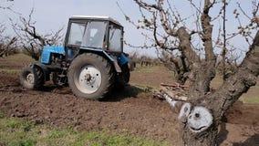 Τρακτέρ που καλλιεργεί το έδαφος με έναν βωλοκόπο δίσκων στον κήπο φρούτων απόθεμα βίντεο
