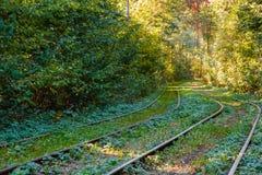 Τραμ και ράγες τραμ στο ζωηρόχρωμο δάσος Στοκ φωτογραφία με δικαίωμα ελεύθερης χρήσης