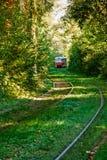 Τραμ και ράγες τραμ στο ζωηρόχρωμο δάσος Στοκ Φωτογραφίες
