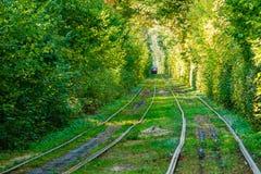 Τραμ και ράγες τραμ στο ζωηρόχρωμο δάσος Στοκ φωτογραφίες με δικαίωμα ελεύθερης χρήσης
