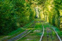 Τραμ και ράγες τραμ στο ζωηρόχρωμο δάσος Στοκ Εικόνα