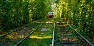 Τραμ και ράγες τραμ στο ζωηρόχρωμο δάσος Στοκ Εικόνες