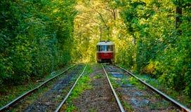 Τραμ και ράγες τραμ στο ζωηρόχρωμο δάσος Στοκ εικόνα με δικαίωμα ελεύθερης χρήσης