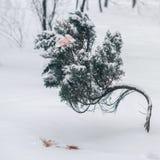 Τραπεζογραμμάτια ρουβλιών πέντε χιλιάδων στο χειμερινό δέντρο Στοκ Εικόνες
