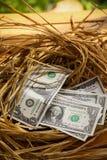 Τραπεζογραμμάτιο δολαρίων στα αυγά φωλιών, ανάπτυξη της επιχείρησης και της επιχείρησης γένεσης, νέα επιχείρηση που αρχίζουν από  Στοκ Φωτογραφίες