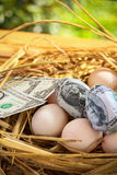 Τραπεζογραμμάτιο δολαρίων στα αυγά φωλιών, ανάπτυξη της επιχείρησης και της επιχείρησης γένεσης, νέα επιχείρηση που αρχίζουν από  Στοκ Εικόνες
