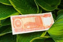 Τραπεζογραμμάτιο πενήντα της Βενεζουέλας bolivares στα φύλλα στοκ εικόνα με δικαίωμα ελεύθερης χρήσης