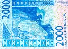 Τραπεζογραμμάτιο Currancy της Αφρικής Στοκ Εικόνα