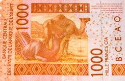 Τραπεζογραμμάτιο Currancy της Αφρικής Στοκ Φωτογραφία