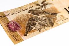 Τραπεζογραμμάτιο currancy της Νότιας Αμερικής Στοκ Φωτογραφία