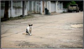 Τραυματισμένη και ασθενής περιπλανώμενη γάτα στο πεζοδρόμιο οδών Στοκ Φωτογραφία