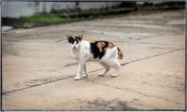 Τραυματισμένη και ασθενής περιπλανώμενη γάτα στο πεζοδρόμιο οδών Στοκ εικόνα με δικαίωμα ελεύθερης χρήσης