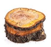 Τραχιά αποκοπή του οπωρωφόρου δέντρου στοκ φωτογραφία με δικαίωμα ελεύθερης χρήσης
