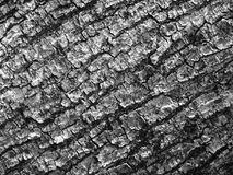 Τραχιά επιφάνεια ενός κορμού δέντρων Στοκ φωτογραφίες με δικαίωμα ελεύθερης χρήσης