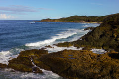Τραχιά παραλία με τους βράχους και τα δέντρα στο λιμένα Macquarie Αυστραλία Στοκ φωτογραφία με δικαίωμα ελεύθερης χρήσης