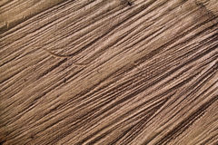 Τραχιά δρύινη διατομή κούτσουρων Στοκ Εικόνα