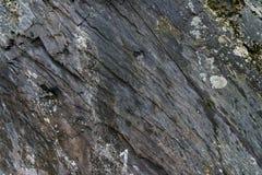 Τραχιά φυσική πέτρα με την πράσινη και άσπρη σύσταση βρύου Στοκ εικόνα με δικαίωμα ελεύθερης χρήσης