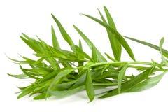 Τραχούρι που απομονώνεται σε ένα άσπρο υπόβαθρο Artemisia dracunculus Στοκ εικόνες με δικαίωμα ελεύθερης χρήσης