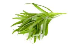 Τραχούρι που απομονώνεται σε ένα άσπρο υπόβαθρο Artemisia dracunculus Στοκ φωτογραφία με δικαίωμα ελεύθερης χρήσης