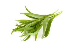 Τραχούρι σε ένα άσπρο υπόβαθρο Artemisia dracunculus Στοκ φωτογραφία με δικαίωμα ελεύθερης χρήσης