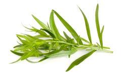 Τραχούρι σε ένα άσπρο υπόβαθρο Artemisia dracunculus Στοκ φωτογραφίες με δικαίωμα ελεύθερης χρήσης