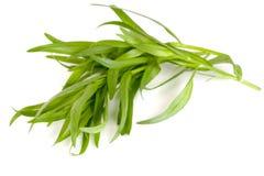 Τραχούρι σε ένα άσπρο υπόβαθρο Artemisia dracunculus Στοκ Εικόνα