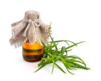 Τραχούρι (Artemisia dracunculus) με το φαρμακευτικό μπουκάλι Στοκ εικόνες με δικαίωμα ελεύθερης χρήσης