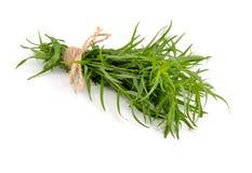 Τραχούρι (Artemisia dracunculus) Στοκ φωτογραφίες με δικαίωμα ελεύθερης χρήσης