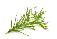 Τραχούρι (Artemisia dracunculus) Στοκ Εικόνες